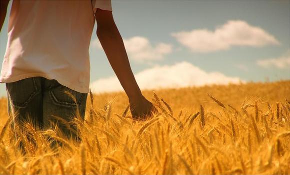 paseando-por-un-campo-de-trigo