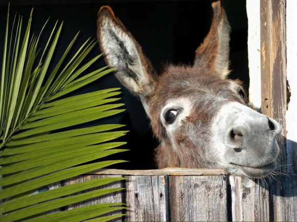 palm-and-donkey