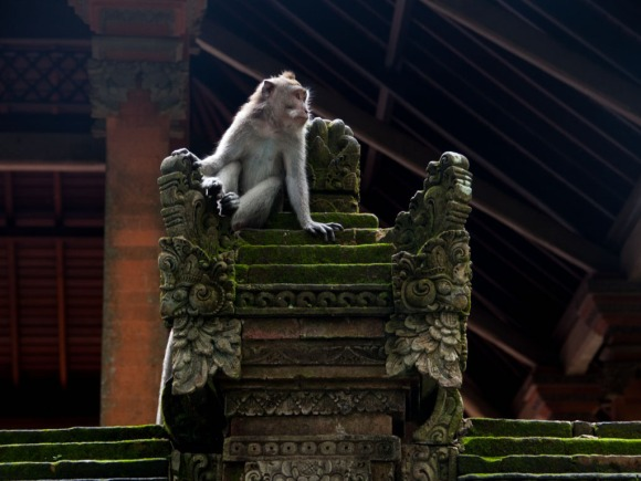 sacred-monkey-forest-sanctuary-ubud-indonesia-j-a-monkey-sitting-on-a-stone-throne