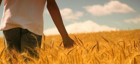 paseando-por-un-campo-de-trigo.jpg